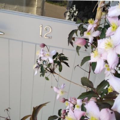 clematic montana rubens next to front door
