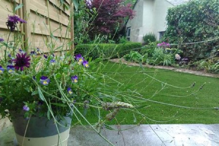 Photo of a cottage back garden, with a lawn and planted beds.  Lavendar and viola plants in a pot near to the camera